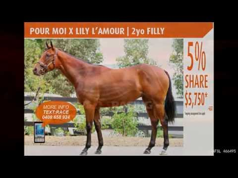Racehorse Syndicates | Horse Syndications | Racehorse Shares