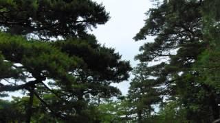 金沢の兼六園は水戸偕楽園、岡山後楽園と並ぶ日本三名園の一つです 現在...