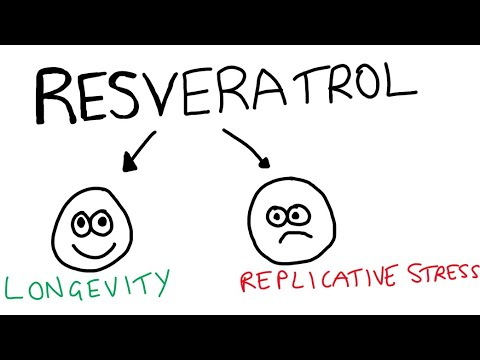 Resveratrol induces replicative stress...what does this mean?