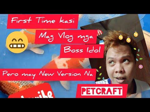 Breeding Japanese Koi Demonstration [Tagalog] | PetCraft