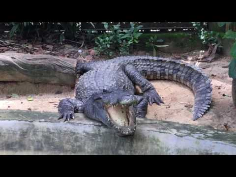 Saigon Zoo & Botanical Garden - Ho Chi Minh City