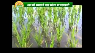 Know about grain cultivation and polyhouse farming