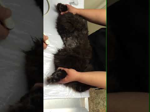 Aortic Outflow Velocity in Cats