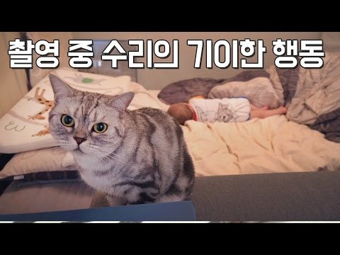 촬영 중 수리의 기이한 행동! weird behavior of Suri while filming [SURI&NOEL]
