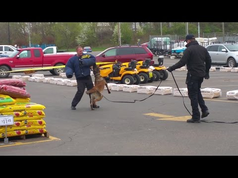 Tuscarawas County Sheriff K9 Patrol Dog Bite DEMO New Philadelphia Police