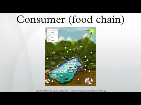 Consumer (food chain)