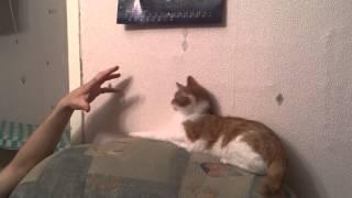кот без когтей