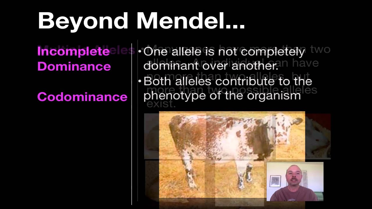 Beyond Mendelian Genetics Worksheet: Beyond Mendelian Genetics   YouTube,