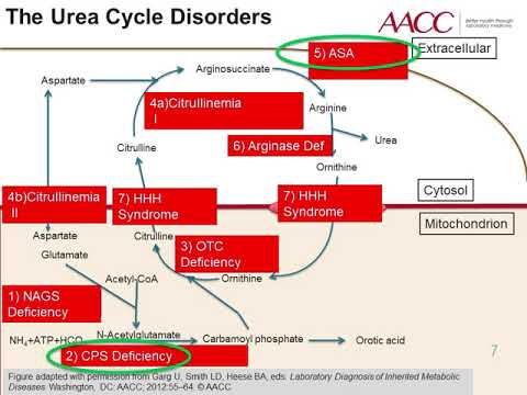 Inherited Disorders of the Urea Cycle
