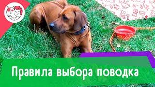 4 правила выбора поводка для собаки