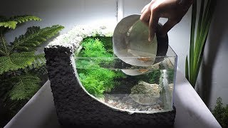Foam box Aquarium DIY with Fish (very low cost) | Aquarium P...