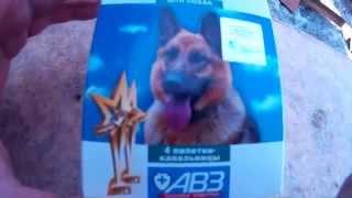 Обрабатываем собаку каплями от клещей и блох