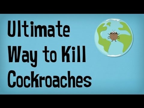 How to Kill Roaches in your House or Apartment | Best way to Kill Cockroaches | Pest Control