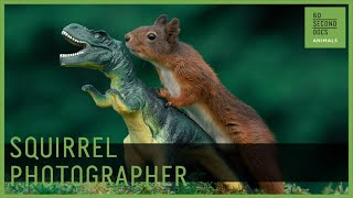 How to Photograph Squirrels Without Photoshop