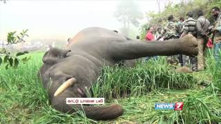 Male elephant found electrocuted in Ooty