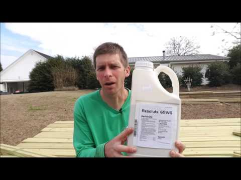 How to Control Crabgrass in Winter with a Pre Emergent Herbicide