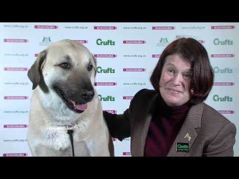 Crufts 2015: Best of Breed winner Jessica Voss