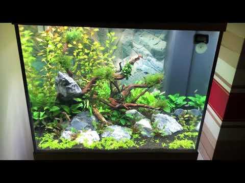 Juwel Lido 200 planted tank week 4