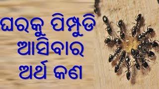 Gharaku pimpudi aasiba bhala na kharap