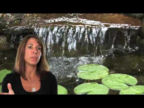 Full Service Aquatics Water Gardens and Koi Ponds Summit, NJ - Customer Testimonials Video