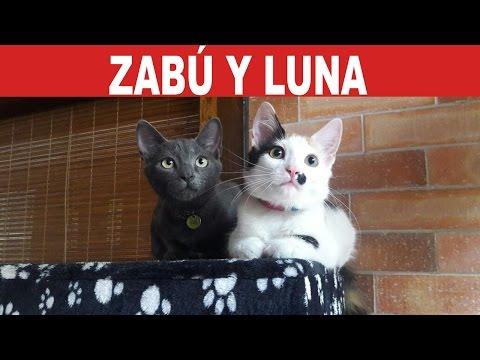 Zabú y Luna: Dos gatitos víctimas de la inconciencia humana | Tu Mascota TV