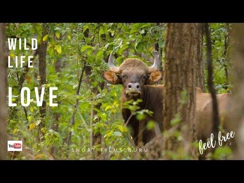 WildLife A Love | Achanakmar Tiger Reserve |Vlog10 by Actor Amitabh Dayal