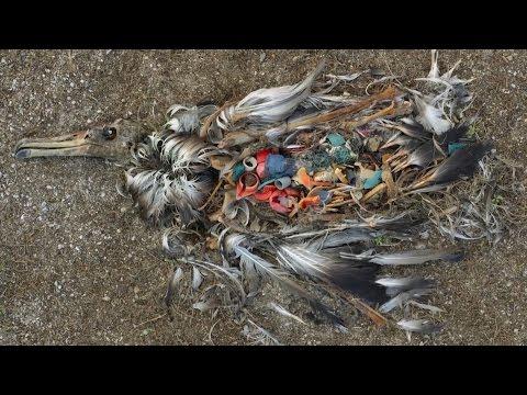 UN #CleanSeas campaign aims to combat marine plastic litter