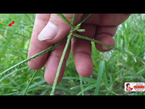 làm đẹp da tại Blogradio.org