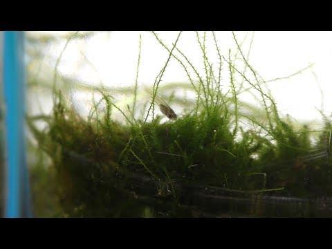 Land Moss In Aquarium