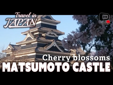 Travel in Japan | Nagano Matsumoto castle | Cherry Blossoms | 松本城・桜