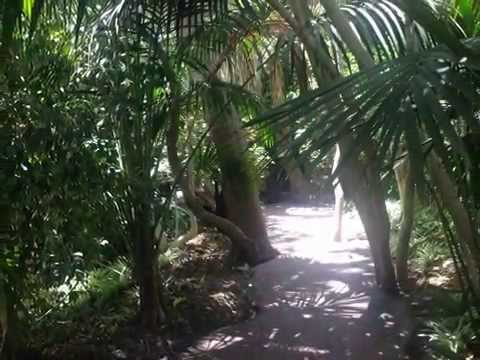 Jungle Park Tenerife - Amusement Zoo Park - the only jungle in Europe