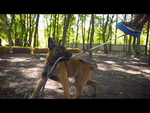the-making-of-a-k9---episode-4