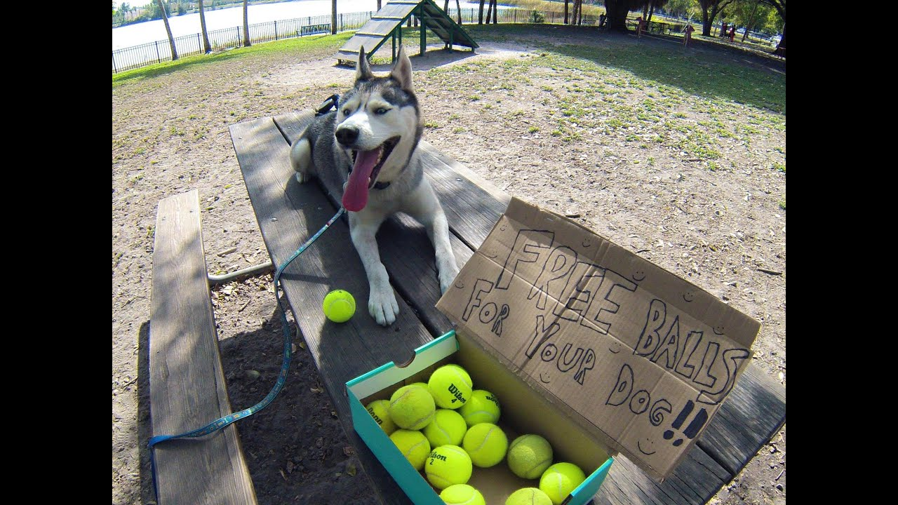 Free Tennis Balls For Your Dog?! (Do Something Kind)