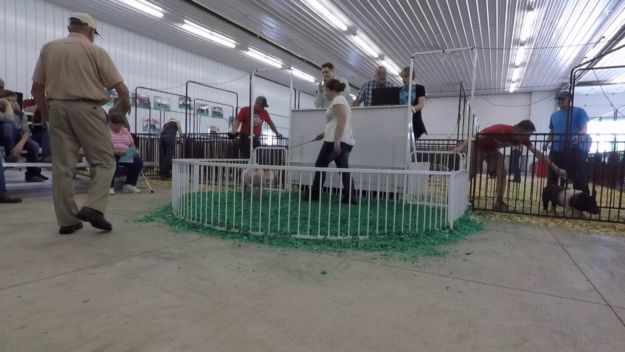 Clayton Neal Auctioneer selling show pigs