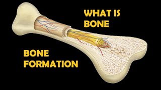 What is Bone ! Functions of Bone || Ossification ?