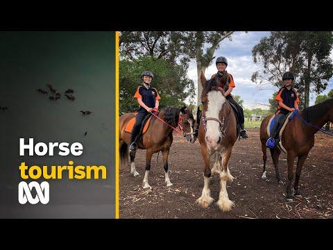 Post-COVID equine tourism boom   ABC Australia