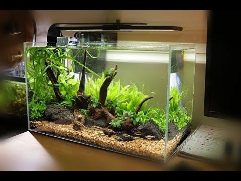 Non-Co2 Aquascape Setup | Waterbox Clear 10