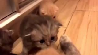 Котята 1 месяц после рождения!