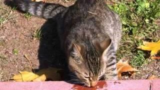 Покормите бездомных кошек!