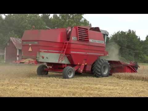 Harvest 2013  Barley with a Massey Ferguson 32