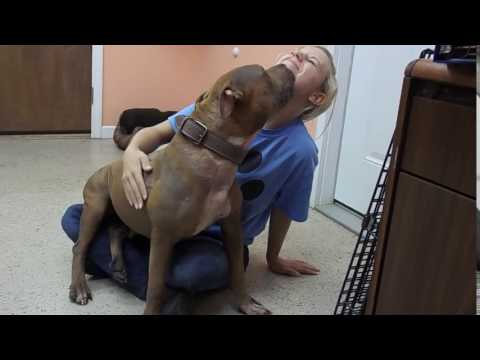 Video of adoptable pet named Cuddles