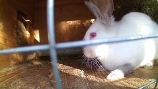 Чем кормить кроликов выгодней! Часть 2 подведение итогов.