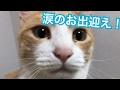 猫達の涙ながらのお出迎えが可愛すぎる!!