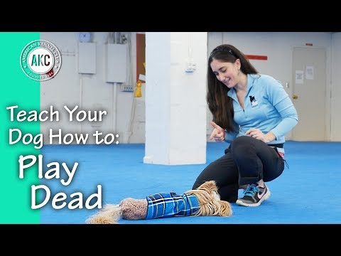 Teach Your Dog How to Play Dead - AKC Trick Dog
