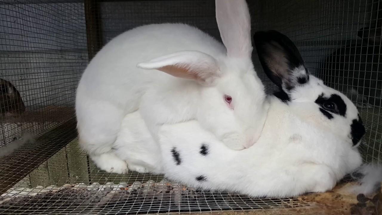 Naked bunnys