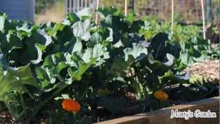 How To Start Your Vegetable Herb Garden Step By Step