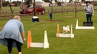 Fun Learning Flyball - Altona Dog Obedience Club Style  - Australia.