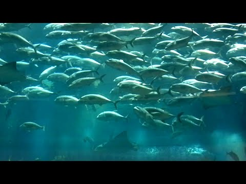 Major Attraction in Dubai Mall|Dubai Mall Aquarium|Dubai Mall underwater zoo|#LoveBirds
