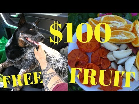 How I Got $100 Of Organic Produce FREE At Los Angeles Farmers Market