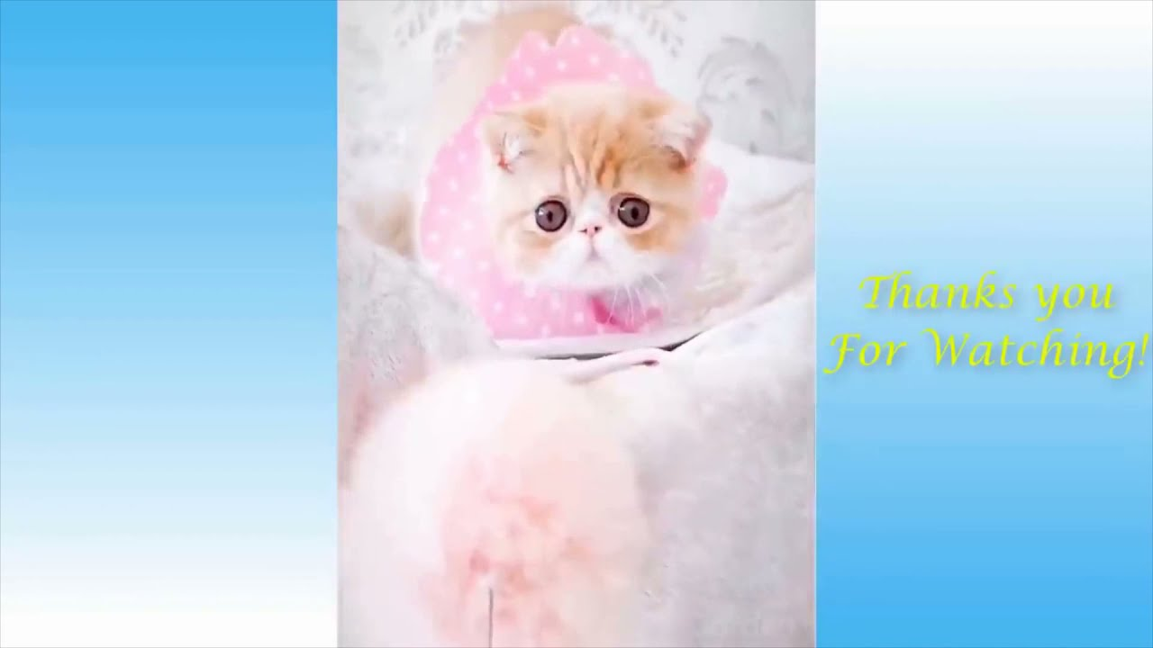 Try Not To Laugh Challenge - Funny Cat & Dog Vines compilation 2021